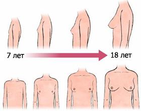 созривание вагини фото