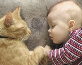 Аллергия на кошек у грудничков
