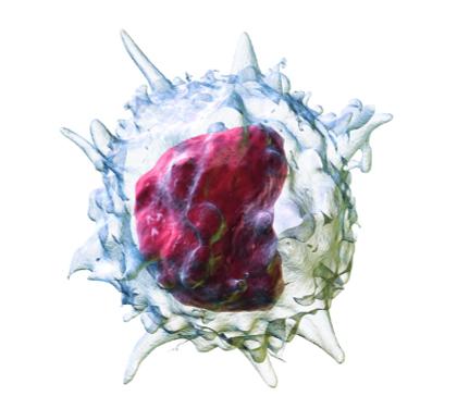 Моноцит в крови
