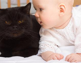 Грудничок и черный кот