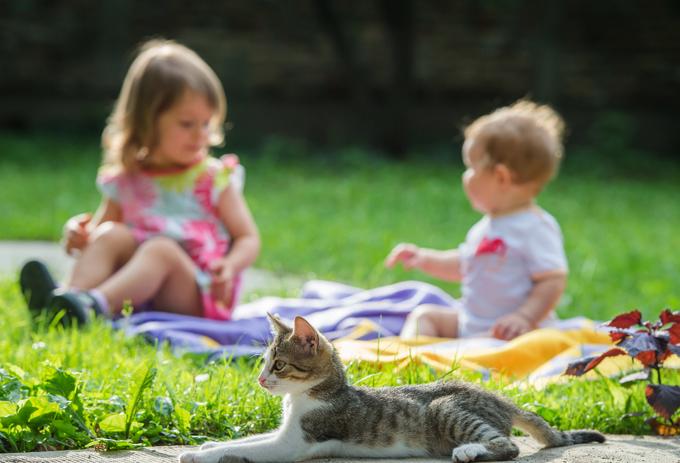 Дети с котом
