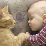 Аллергия на кошек у грудничков: симптомы, лечение и профилактика